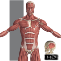 Visual Anatomy 1 (versiunea full) pentru iOS Apple FREE – Gratuit